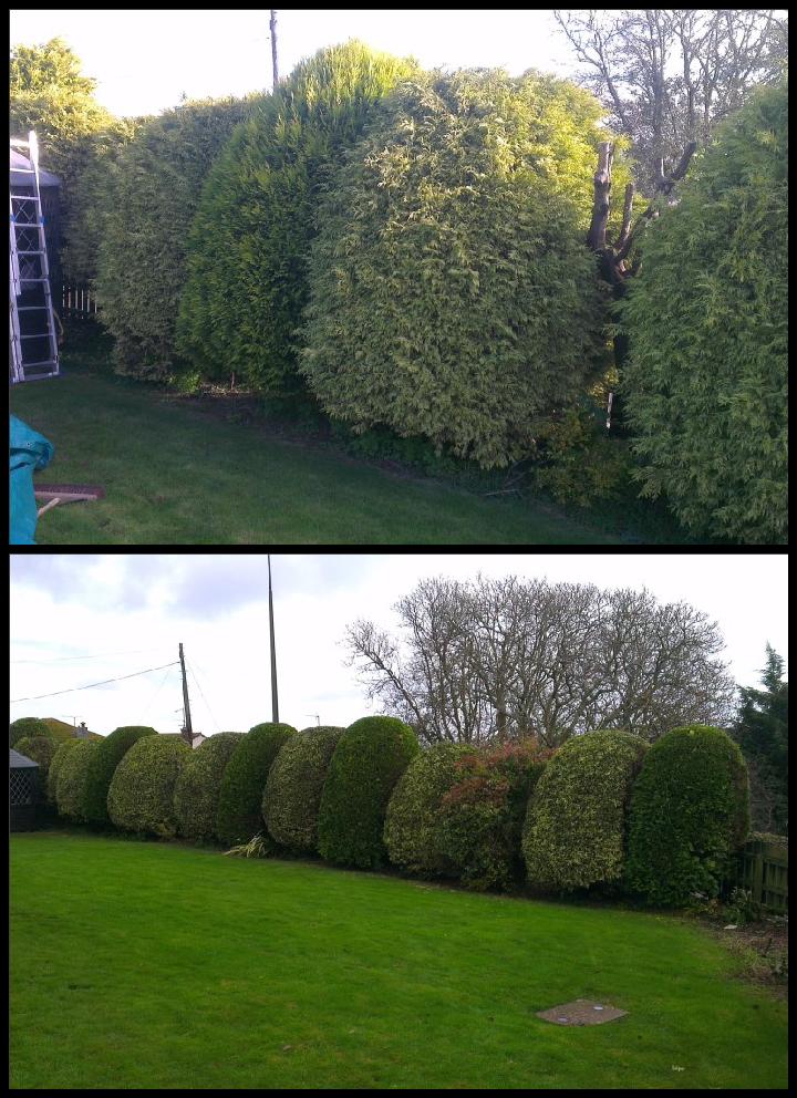 Gardening Maintenance 3